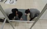 Auchan wystawa 039.jpg